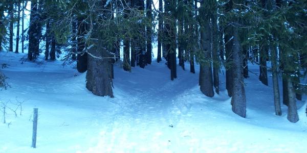 Der Abschnitt durch den Wald beginnt.
