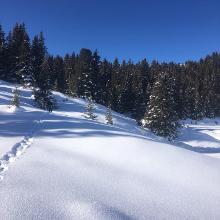 Schneezauber1