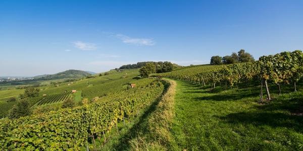 der R9 führt durch die Weinregion Bergstraße