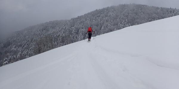 Der bewaldete Hohe Götschen