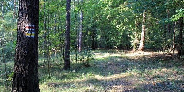 Wanderweg im Thümmlitzwald