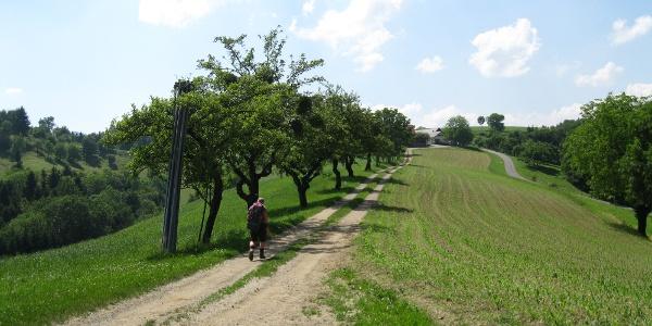 Entlang der Grenze Richtung Pronintsch