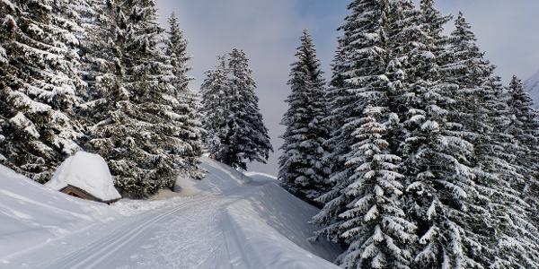 Winterwandern in Damüls