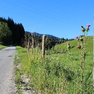 Höhenweg bei Mariabrunn