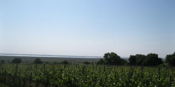 ... und blicken zurück zum Neusiedlersee.