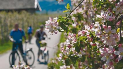 Fahrrad Bozen