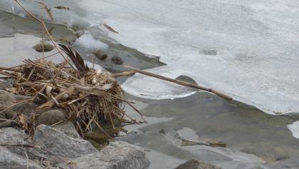 Ufer Impression im Februar