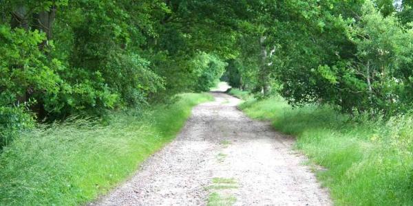 Die VIA ROMEA auf einem Feldweg in der Nähe von Harsefeld