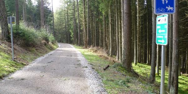 Auch im Waldbereich ist die Strecke asphaltiert.