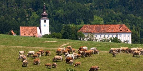 Blick auf Pfarrkirche und Schloss Piber