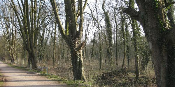 Stadtwald/Nordkanal