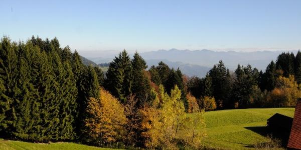 Herbststimmung am Pfänder – im Hintergrund Gipfel im Bregenzerwald.