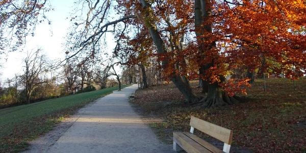 A Normafa ősszel