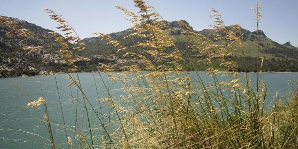 Der Puig de na Franquesa liegt inmitten der malerischen Sierra de Tramuntana.ntana.