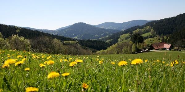 Breitenberg
