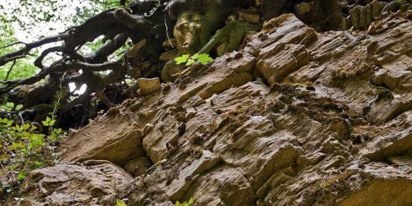 Schräggestellte Kalksteinschichten sind hier zu sehen.