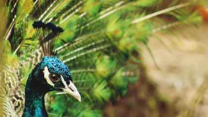 A nyírjesi füvészkert és vadaspark