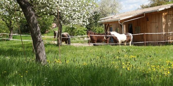 Den Pferdchen gefällt das Frühjahr auch