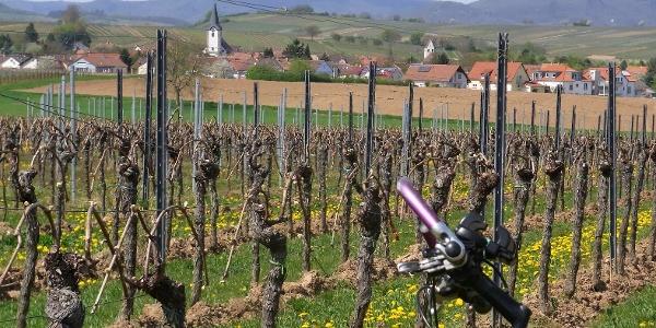 Blick auf das Weindorf Mörzheim