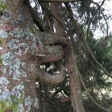 Lustiger Baum am Herrenwälder Hof.