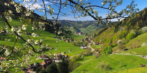 Münstertäler Obertal
