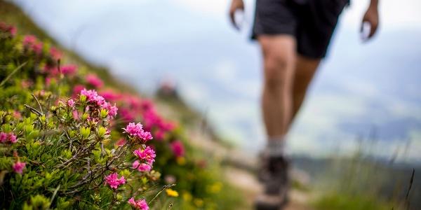 Aufstieg im blütenreichen Frühsommer
