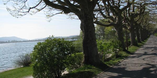 Uferradweg in Radolfzell