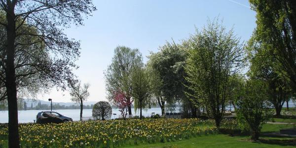 Uferanlagen in Allensbach