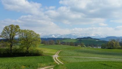 Beim Soppensee mit den Alpen vor Augen