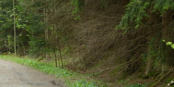 Springendes, hüpfendes Fleisch im Heidelbachtal