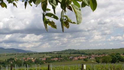 Blick Richtung Ilbesheim mit Kleiner Kalmit