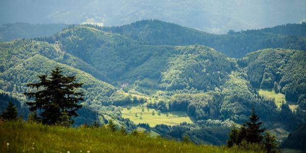 Blick auf ein malerisches Schwarzwaldtal | Photo: Martin Helmecke