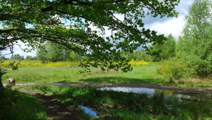 Kleingewässer im Naturschutzgebiet Kirrberg