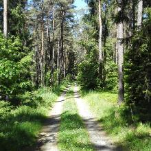 Ein schönerer Teil im Wald