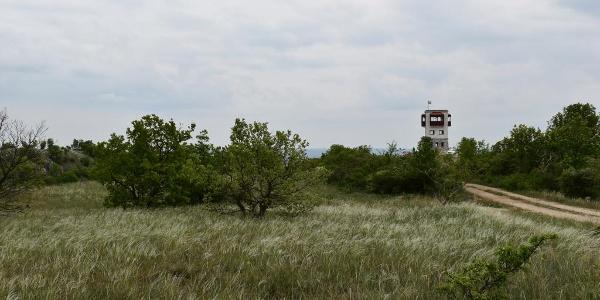 Árvalányhajas mező a Maderspach kilátó mellett