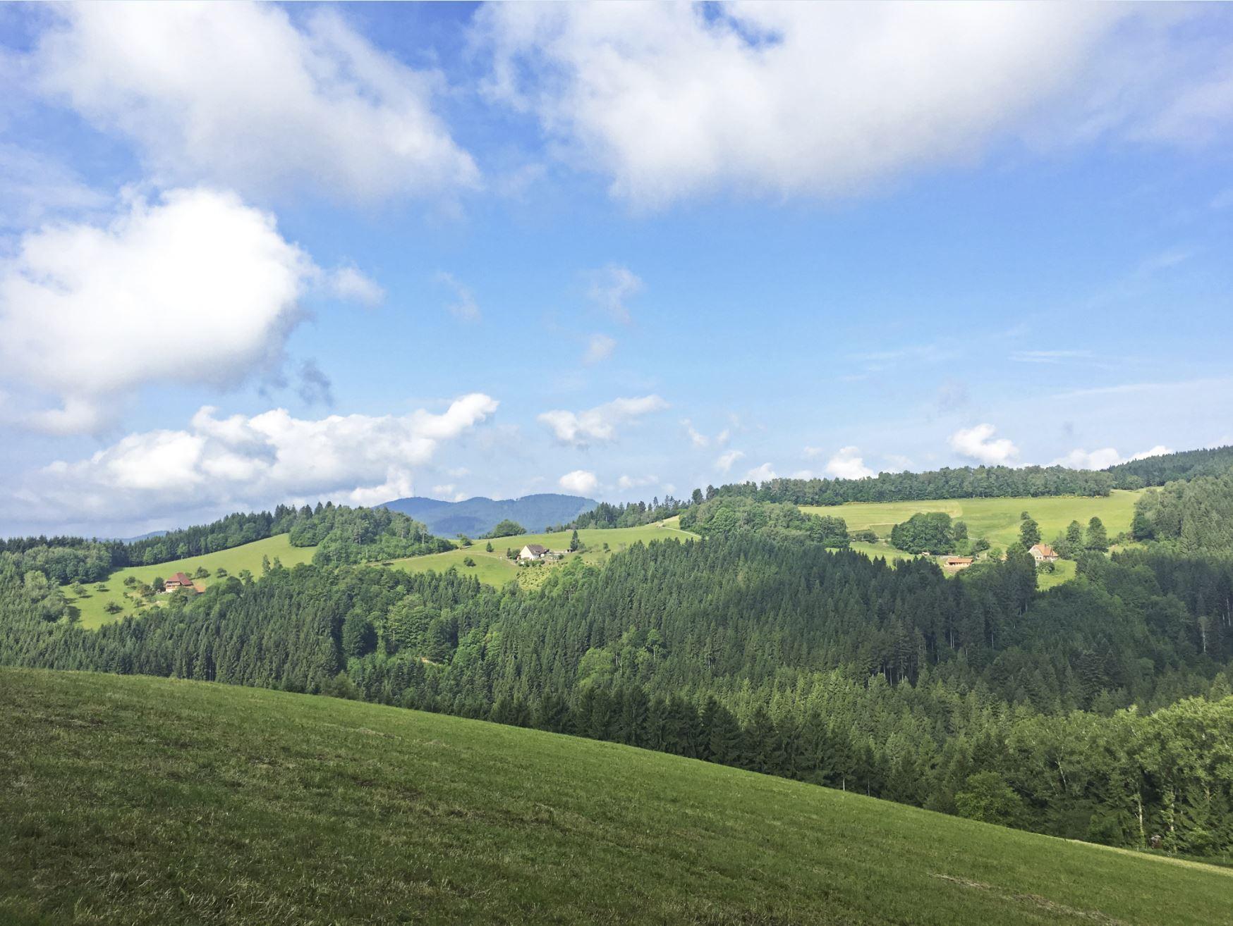 Aussichtspunkt Schwarzwald