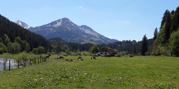 Vilstal mit Alpe Kalbelehof