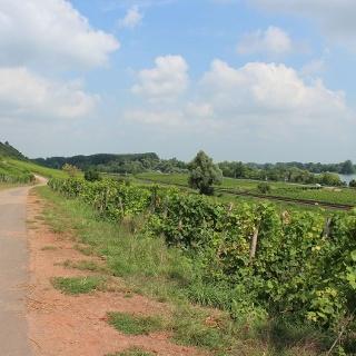 Radweg durch die Weinberge zwischen Nierstein und Nackenheim