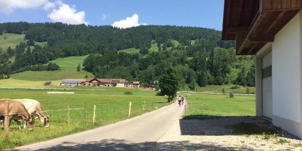 Oberstaufen Richtung Alpsee
