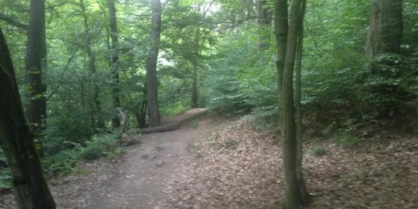 Trail / Wanderweg Gelpetal