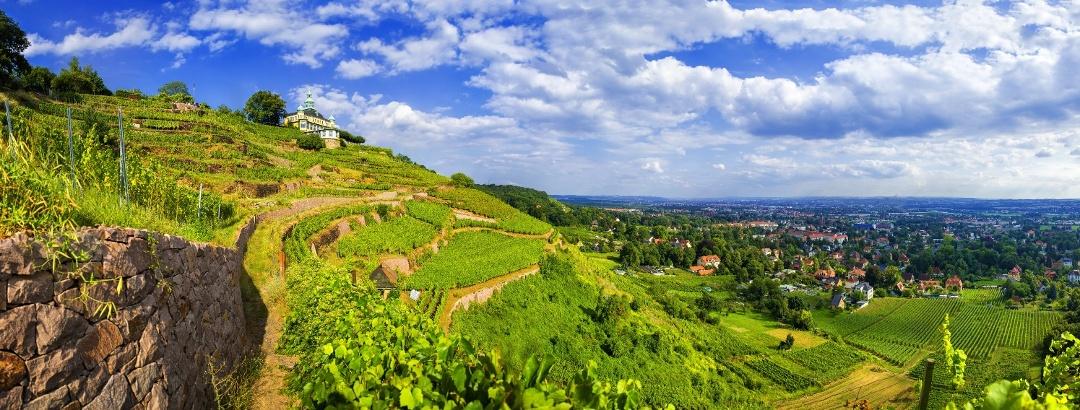 Blick über die Weinberge in Radebeul