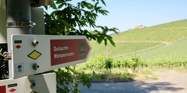 """Der Schwarzwälder Genießerpfad und Premiumwanderweg """"Durbacher Weinpanorama"""""""