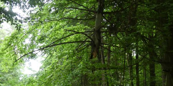 Bemerkenswert: Baum im Baum übern Hölderlinweg