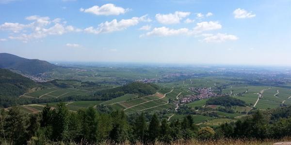 Aussicht vom Föhrlenberg