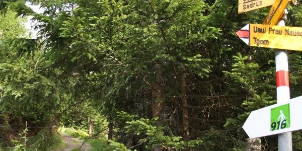 Es geht in den Wald hinein