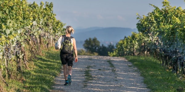 Walking through the vineyards on Ottenberg