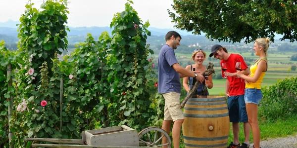 Weindegustation ob Weinfelden