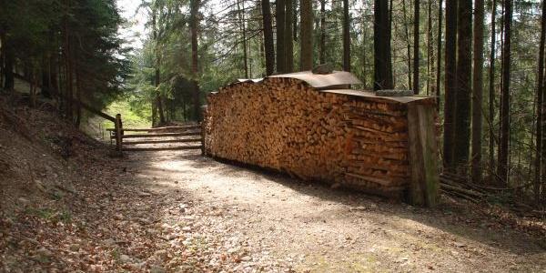 Auf dem Waldweg im Föhrenwäldli