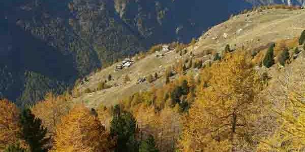 Aussicht auf die heimischen Alpen