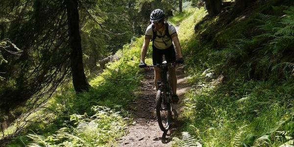 Anspruchsvoller Trail durch den Furschwald